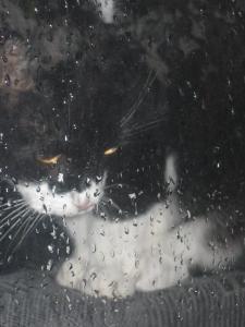 Kesäpäivä Kissa
