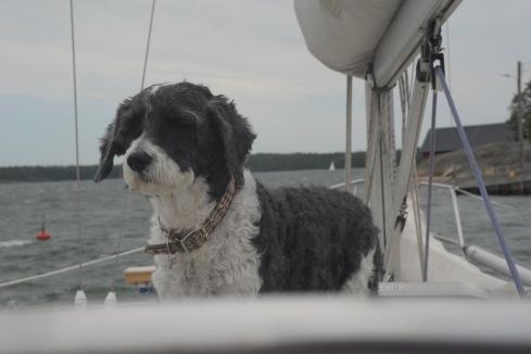 Diva ,veneessä