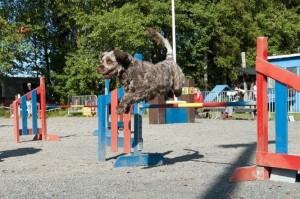 Viksu hyppää