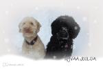 Hippa ja Sonja joulukortti2012