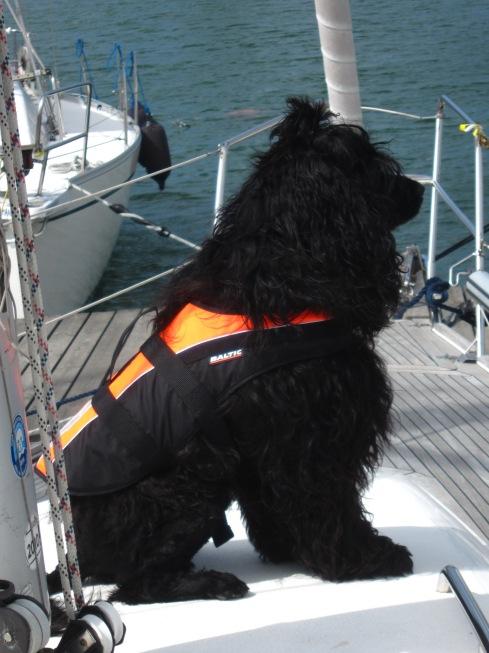 Försti veneessä